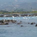 Lixadonisia bird reserve